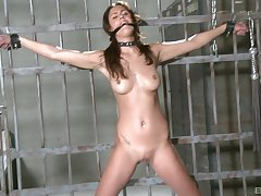 Dirty accompanying chick Diana Stewart enjoys being tortured with toys